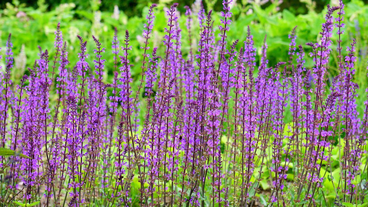 Son muchas las plagas y enfermedades que pueden retrasar el crecimiento de las plantas