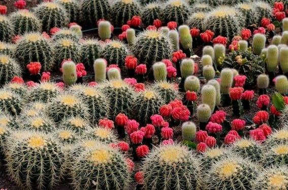 Jardín desértico