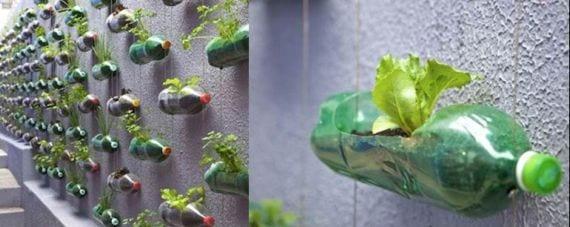 Planta en botella