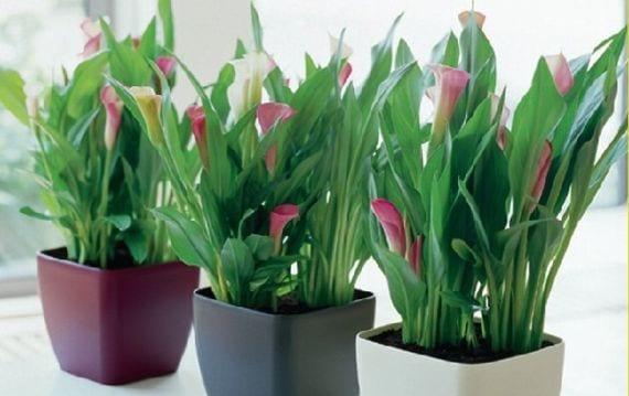 Cinco consejos r pidos para proteger tu jard n en invierno Plantas tropicales interior