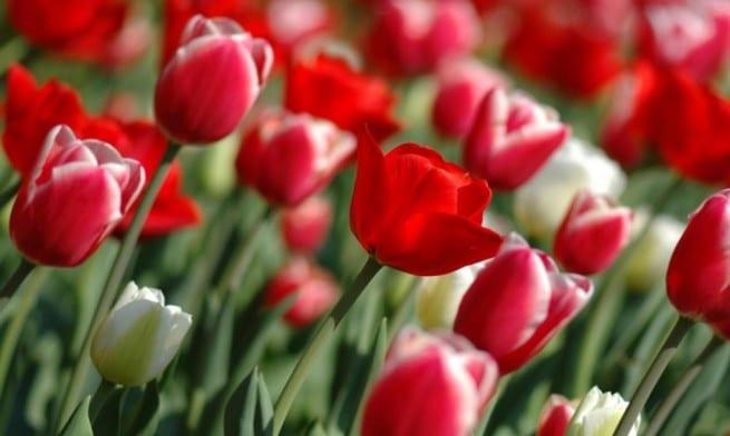Los principales bulbos de flores que se plantan en oto o - Bulbos de otono ...