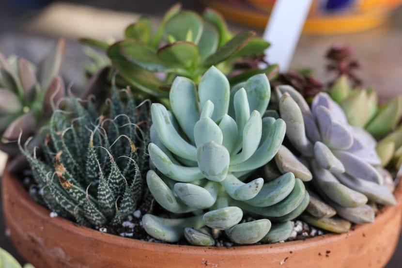 Las suculentas son plantas que quieren luz
