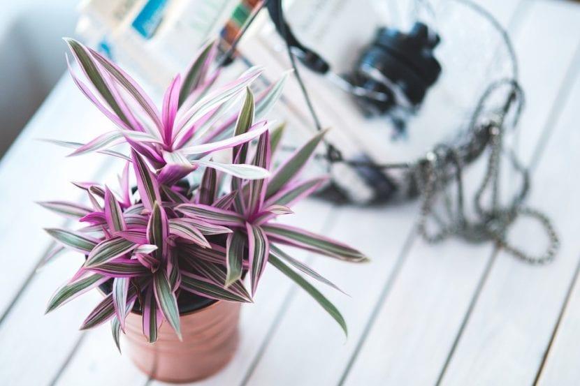 Las plantas de interior no son difíciles de cuidar