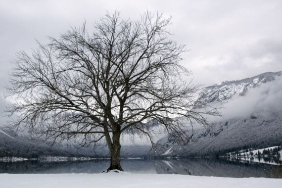 Haya en invierno