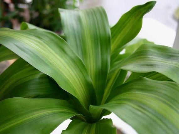 Consejos para cuidar tus plantas de interior en invierno for Abono para plantas de interior