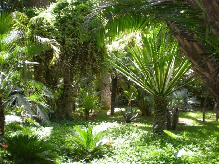 Jardín de Marrakech