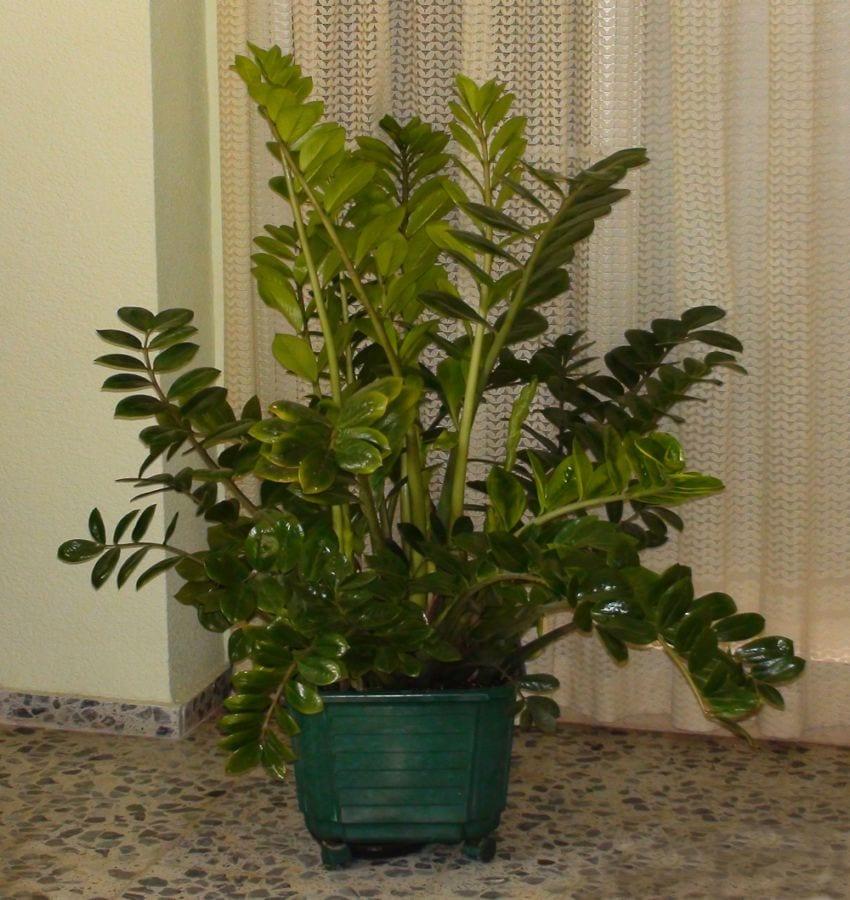 Tres plantas para decorar dormitorios con poca luz for Plantas de interior con poca luz