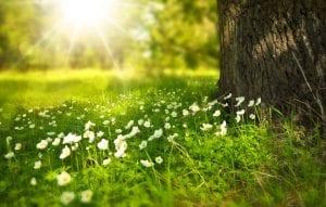 Las plantas dependen mucho del clima