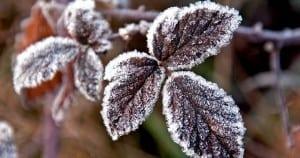 Jardín en invierno