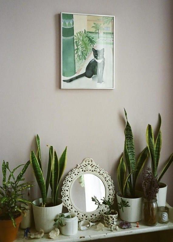 Plantas para habitaciones