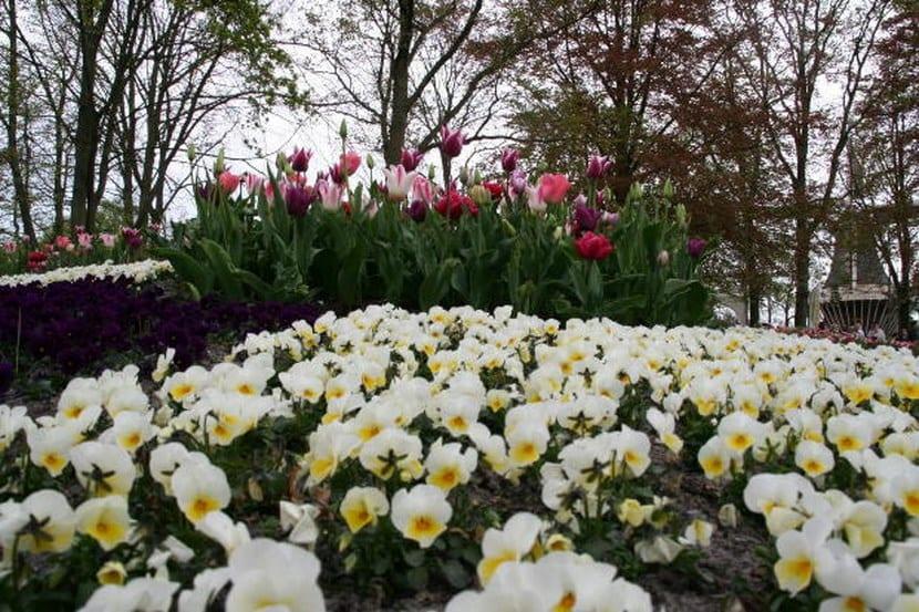 Imagenes De Jardines Con Flores: Decorar Jardines Con Flores Blancas