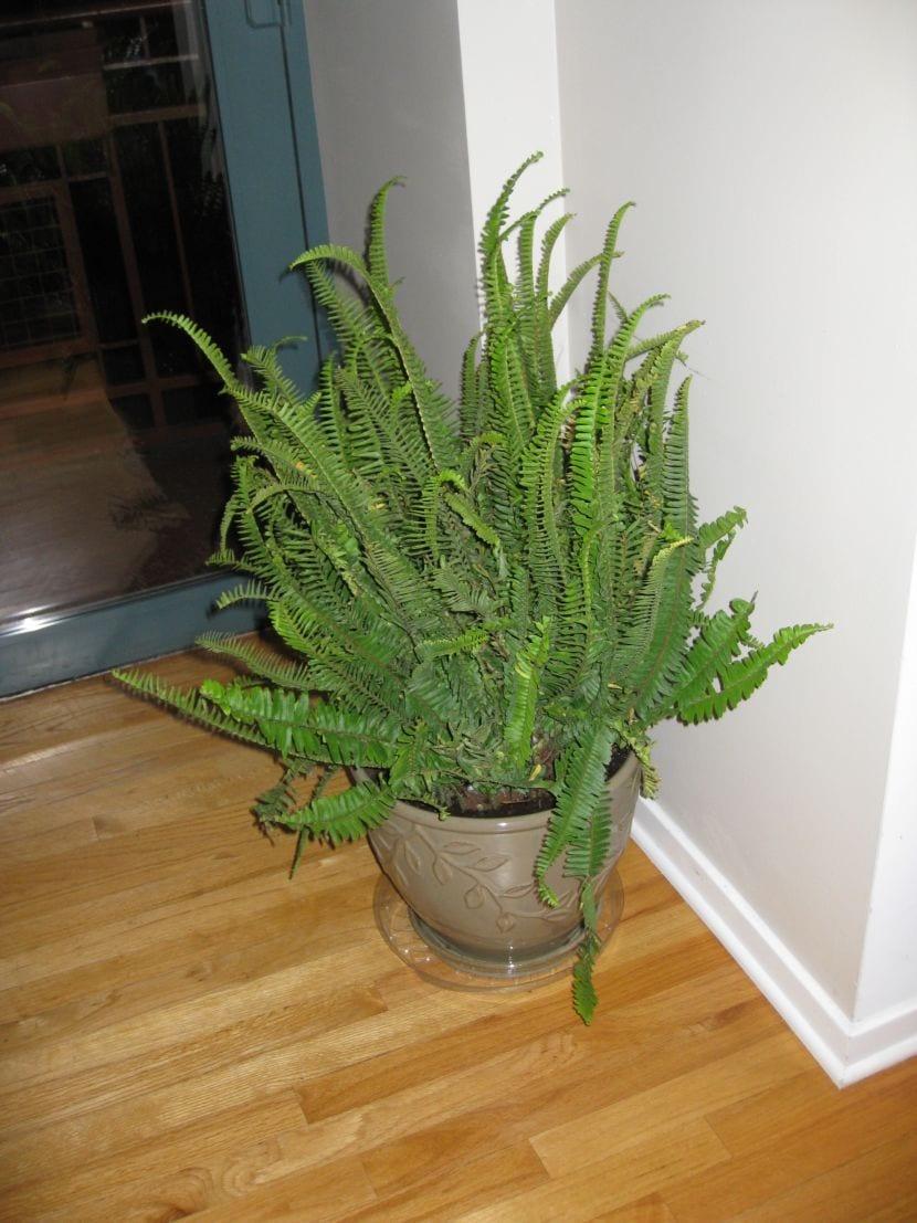 Selecci n de plantas ideales para tener en un piso o apartamento - Plantas de interior que no necesitan luz ...