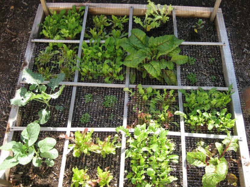 Bandeja de jardinería