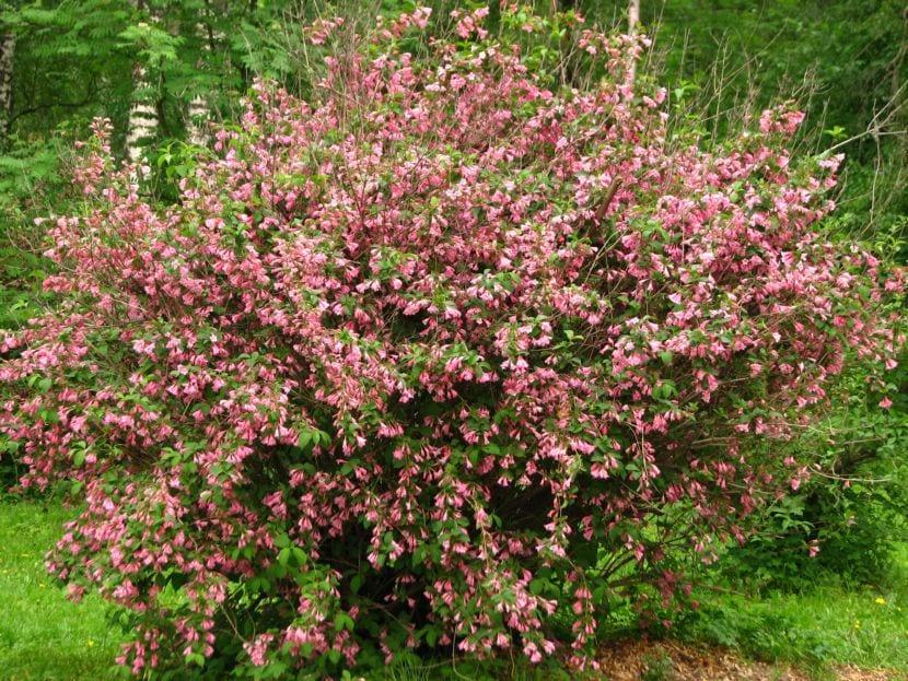 Arbustos para tener en maceta en jard n patio o terraza for Arbustos para macetas exterior