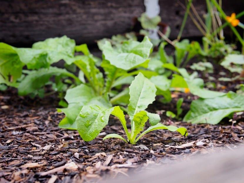 Jardín con lluvias
