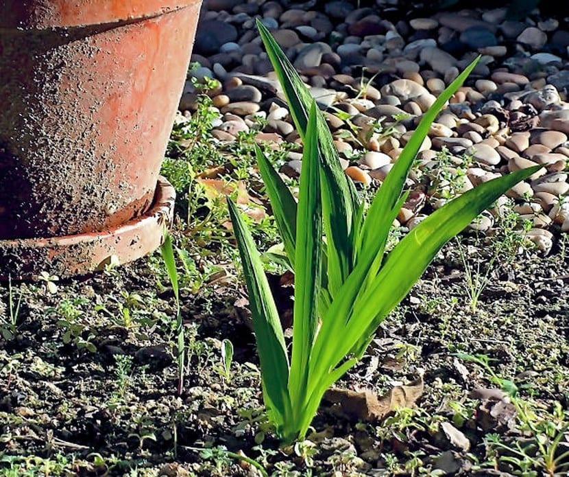 Jardín en abril
