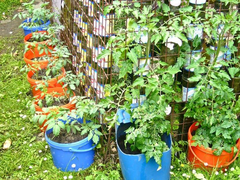 Cultivar vegetales en cubos