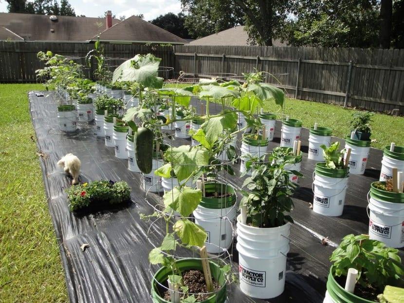 Reciclar cubos para cultivar vegetales for Estudiar jardineria
