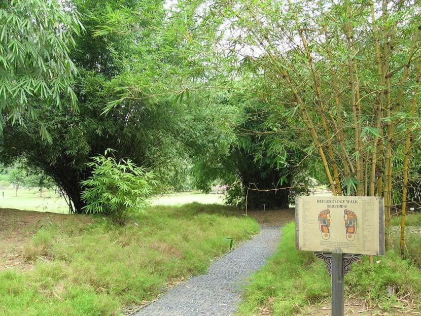 Bambú en el Jardín Botánico de Singapur