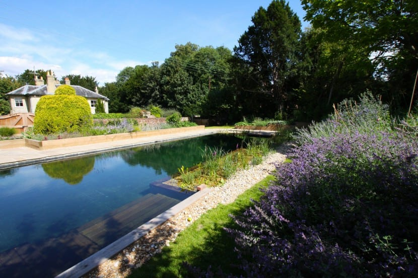 Decorar piscinas con plantas for Plantas para piscinas