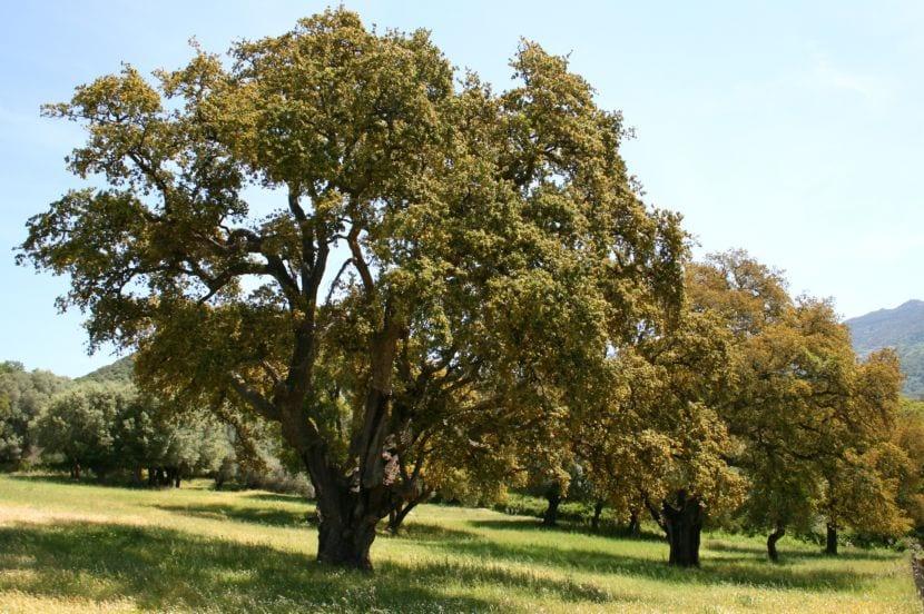 6 rboles de sombra perfectos para climas clidos o templados