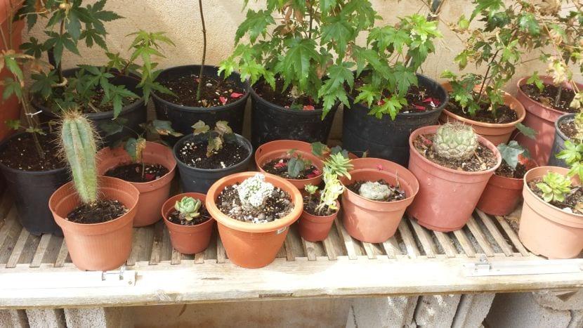 Barrera cactus