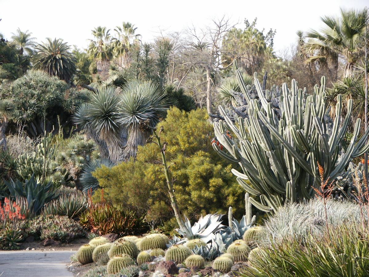 Vista de un jardín seco