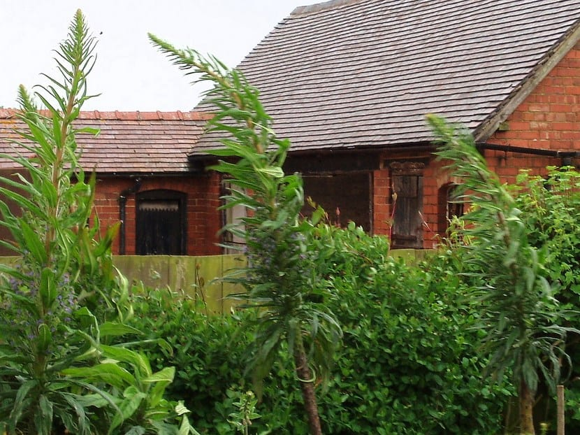Plantas que soportan el viento for Plantas resistentes al sol para terrazas