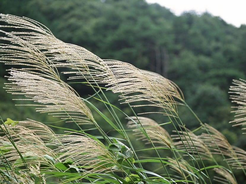 Plantas resistentes al viento
