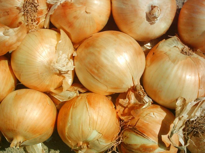 Cebollas, utilízalas para eliminar los pulgones