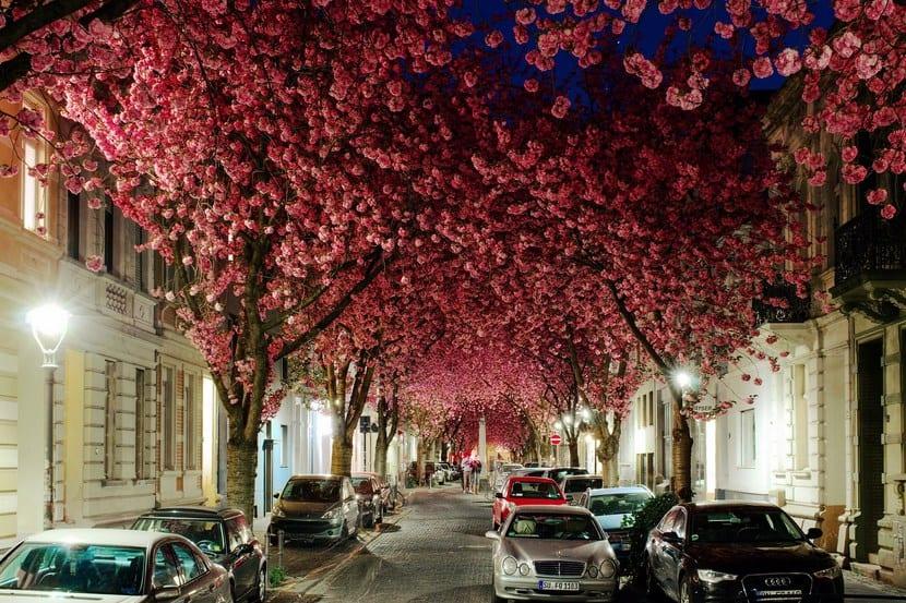 Árboles más bonitos del mundoÁrboles más bonitos del mundo