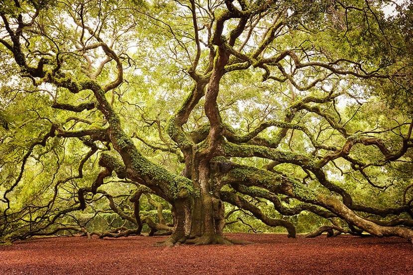 Árboles más bonitos del mundo