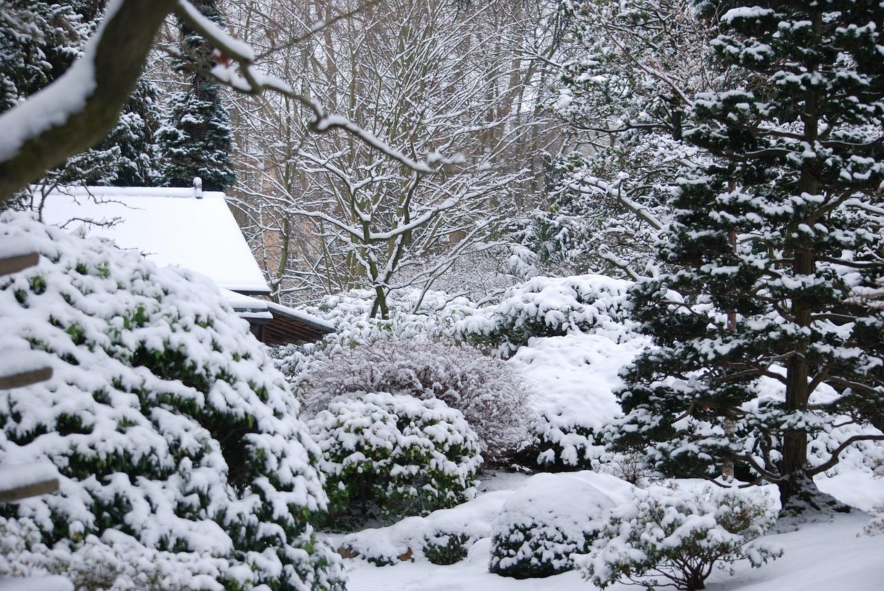 Elige árboles rústicos para tu jardín con heladas