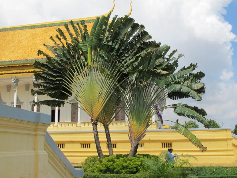 Palmera hawaiana reproduccion asexual de las plantas