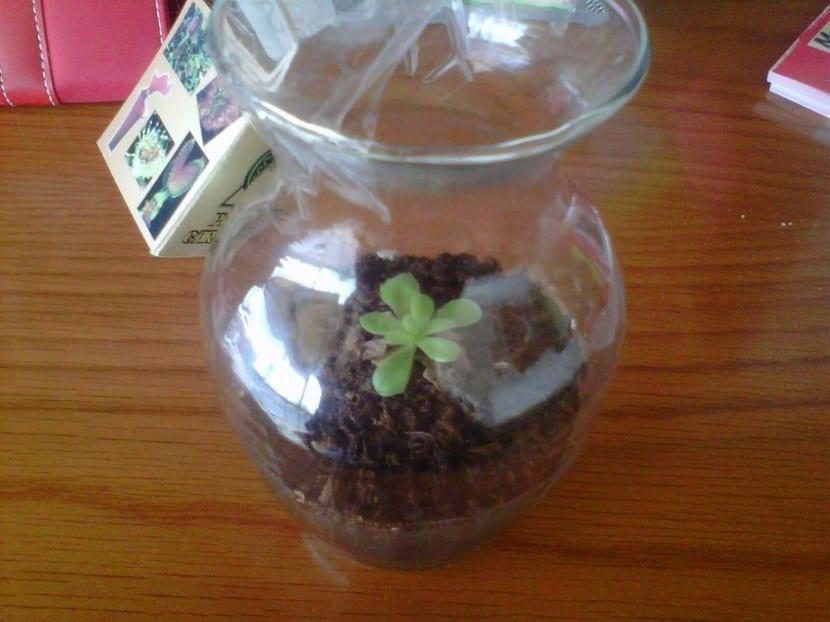 Plantas en pecera