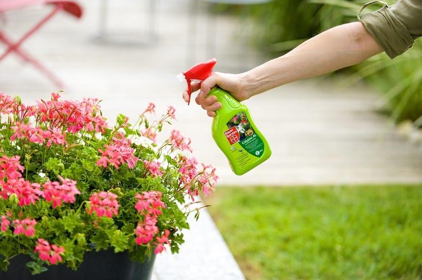 Plagas en plantas