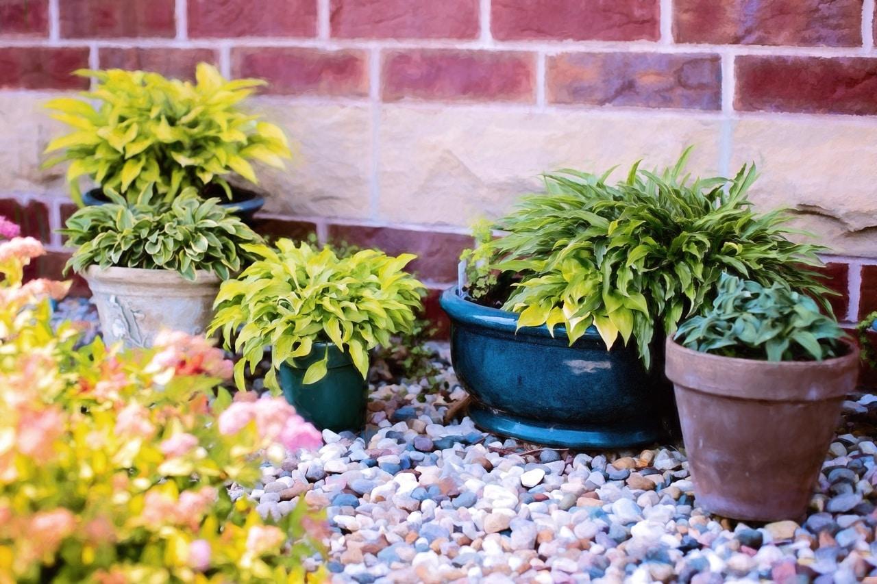 Las plantas en maceta hay que regarlas de vez en cuando