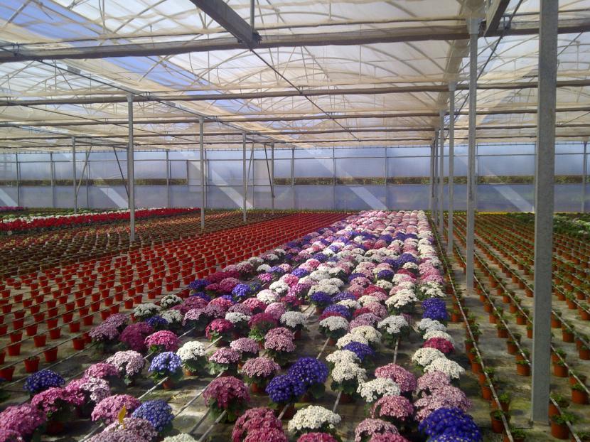D nde comprar plantas for Vivero plantas online