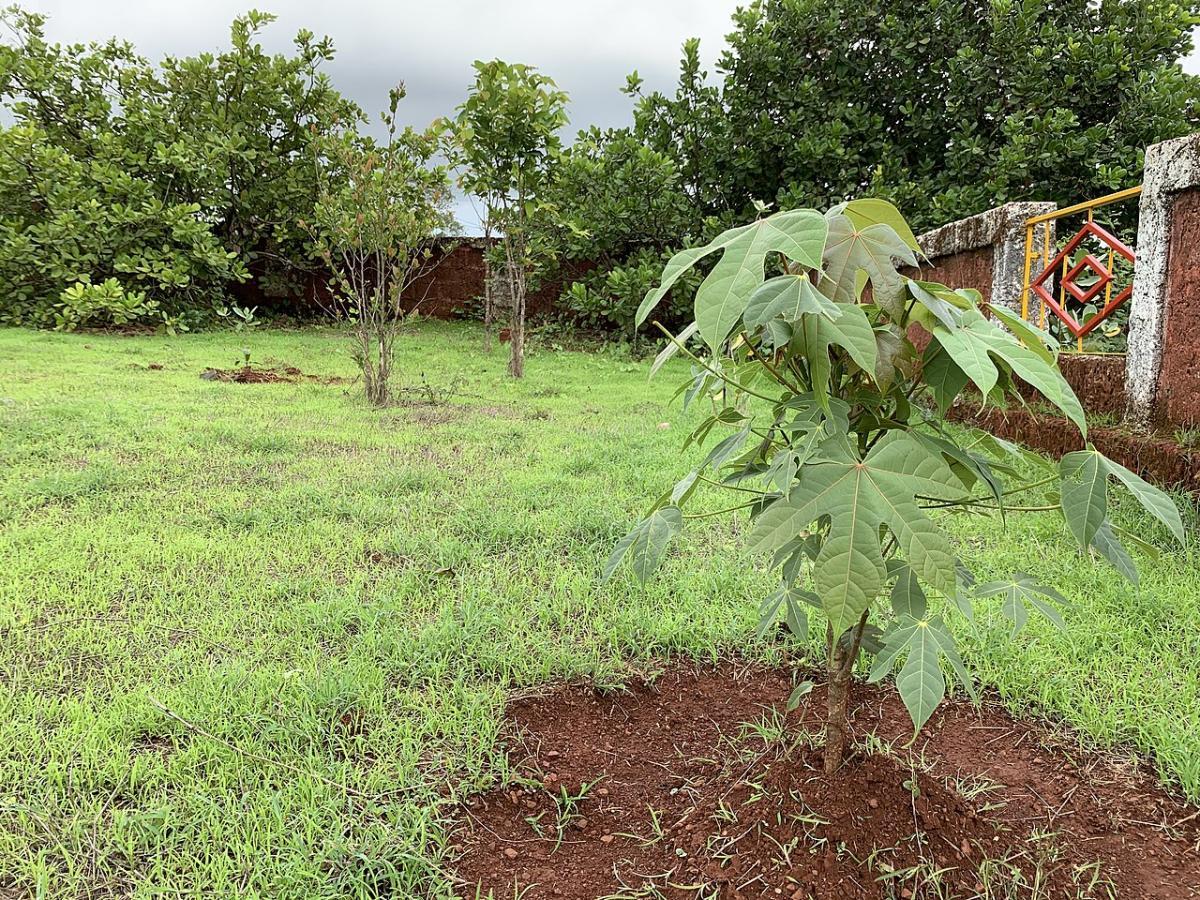 Los árboles se trasplantan con cuidado