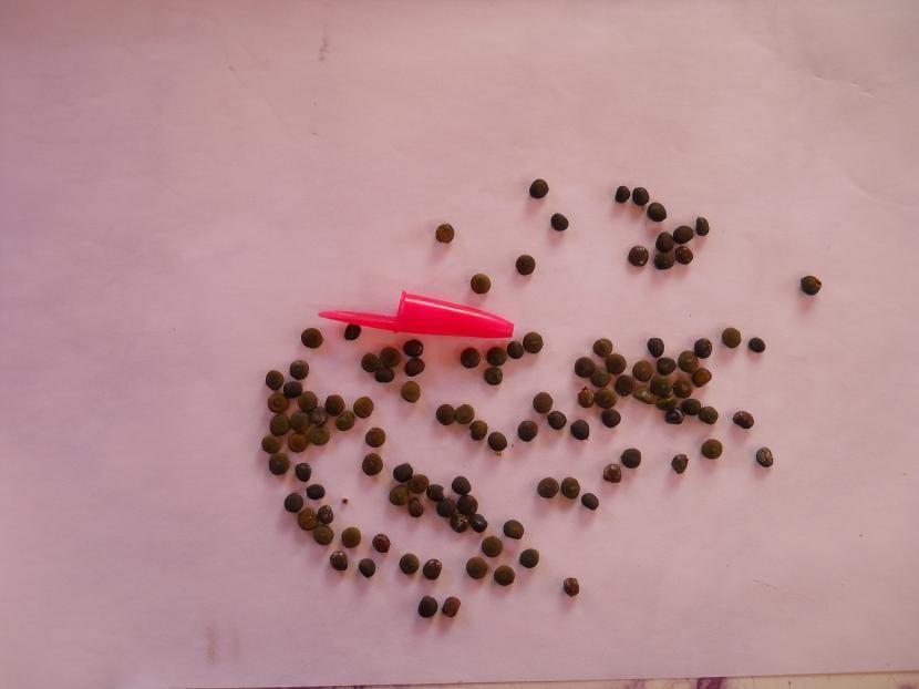 Semillas de Tusca