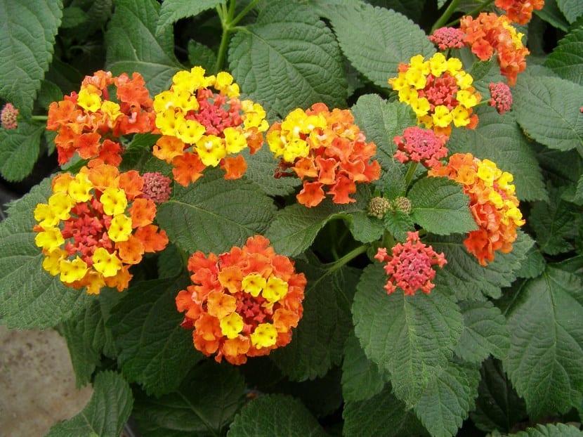 Plantas de sol - Plantas de exterior resistentes al calor ...