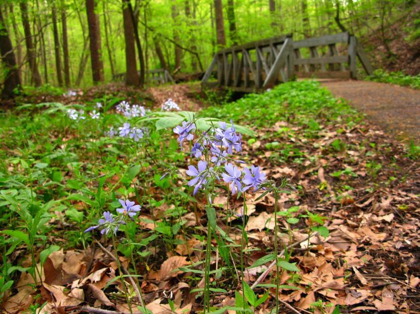 Flores silvestes de la pradera
