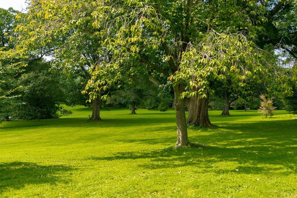 Hay muchos árboles de bajo mantenimiento