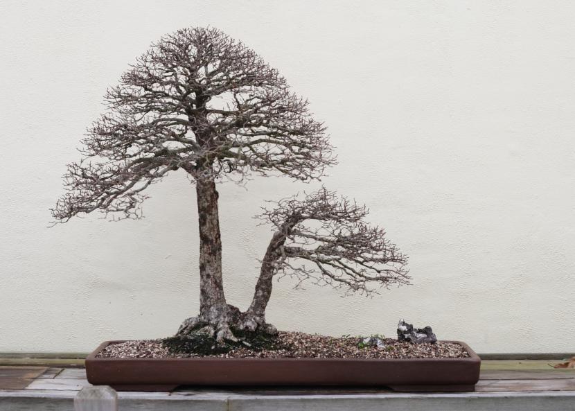 Doble tronco