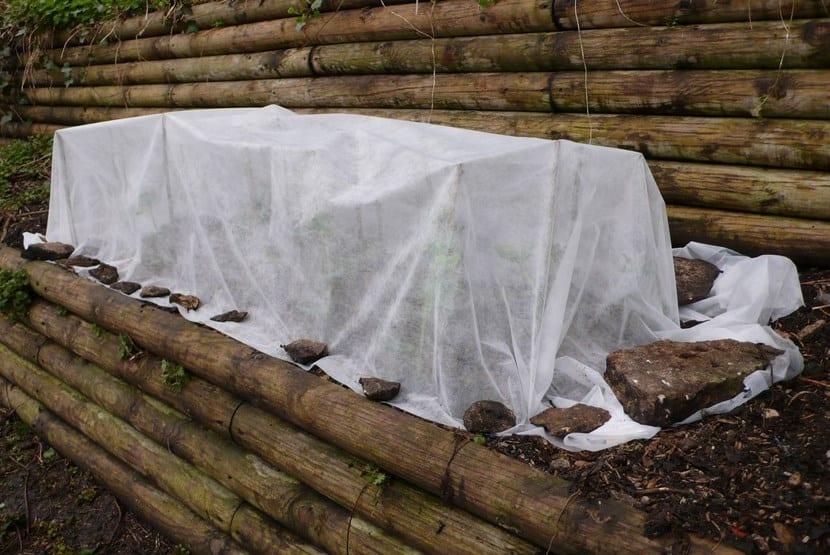 Plantas protegidas en invierno