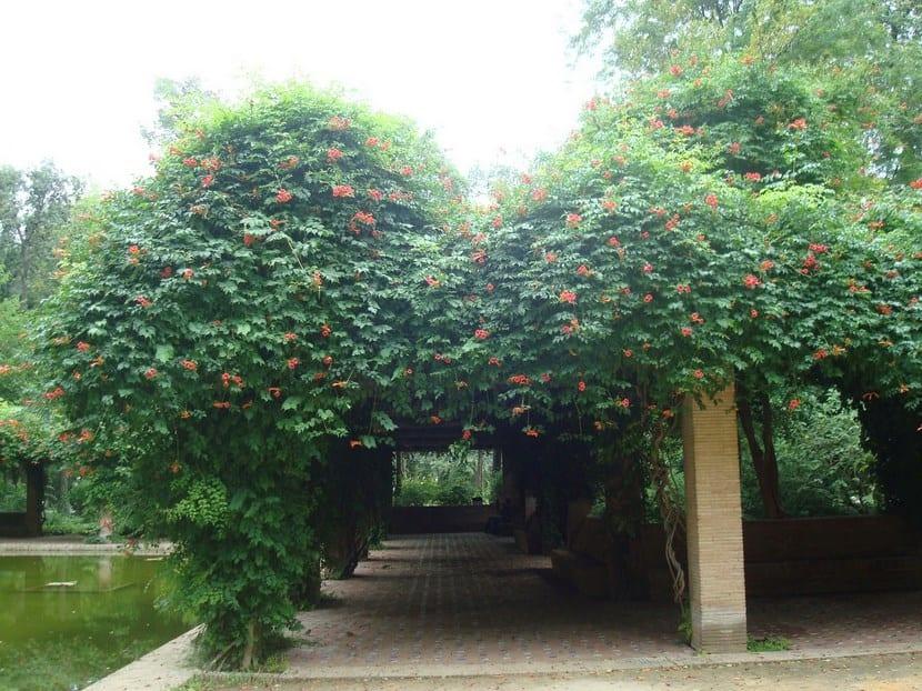 Mejores trepadoras para la sombra todo el a o for Arboles de hoja perenne que crece rapido
