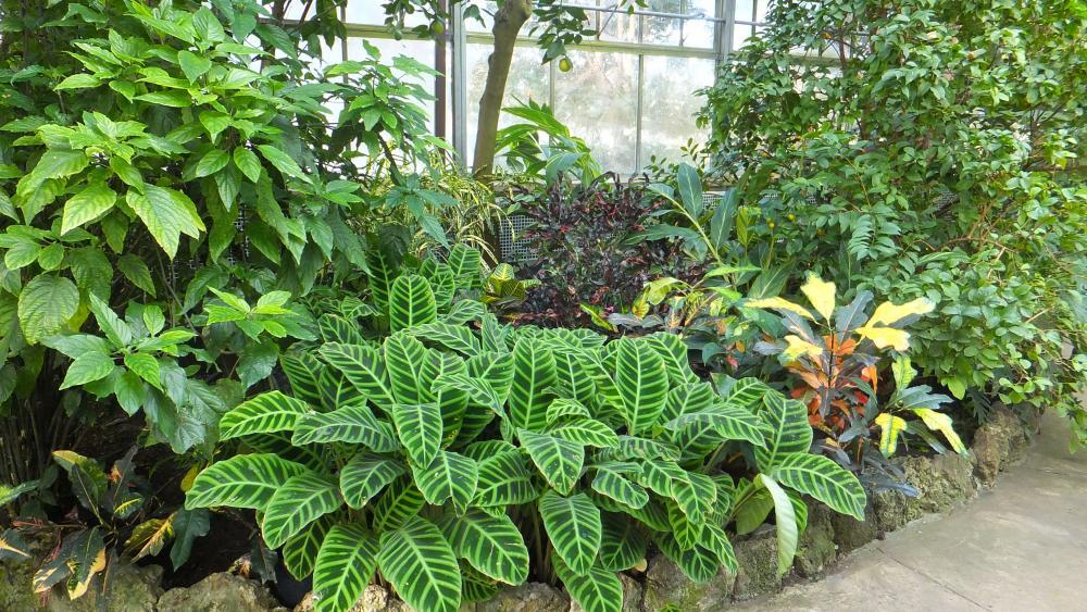 D nde colocar las plantas - Plantas de interior tropicales ...