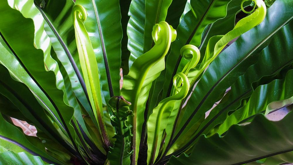 Los usos del bicarbonato de sodio en las plantas