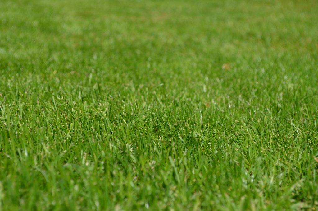 El césped de raygrass es todoterreno