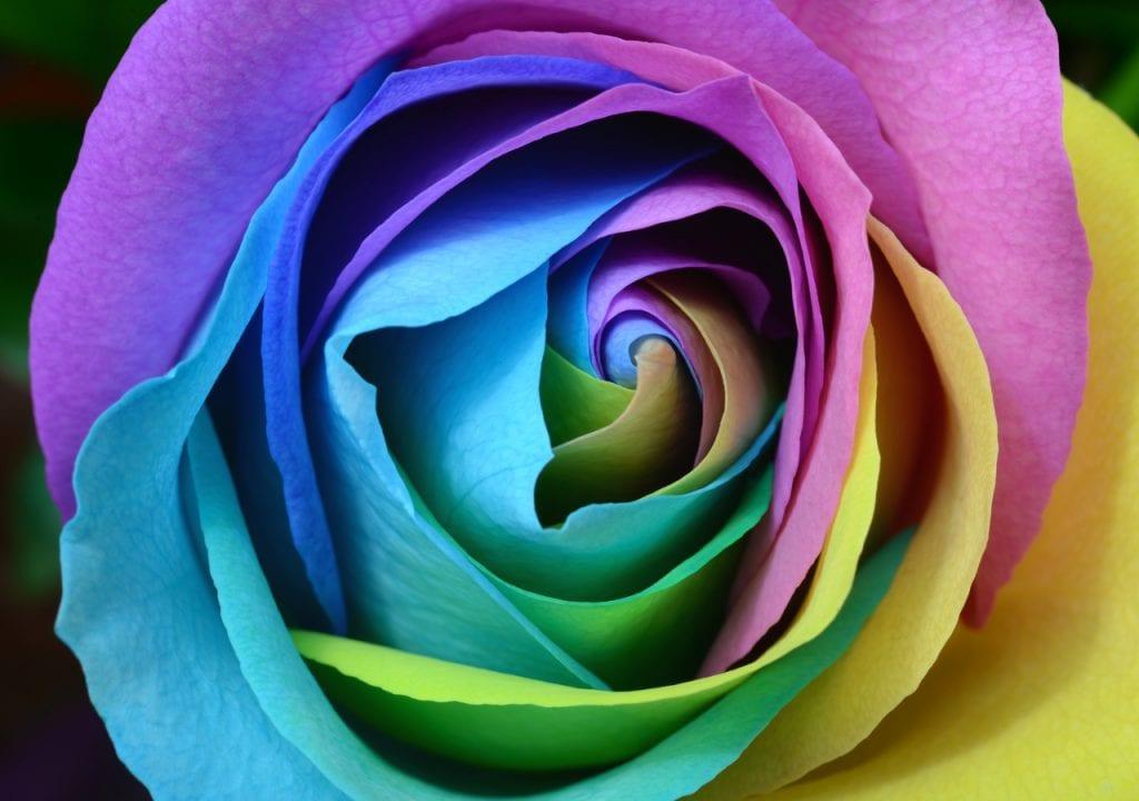 La flor multicolor es preciosa